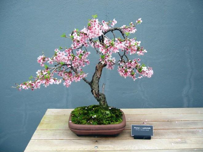 Ngất ngây với 15 chậu hoa bonsai mini siêu đẹp để trang trí nhà dịp Tết - Ảnh 15.