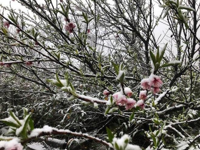 Sa Pa tuyết phủ trắng xóa như ngôi làng cổ tích, du khách ngỡ ngàng vì cảnh tượng quá đẹp - Ảnh 3.