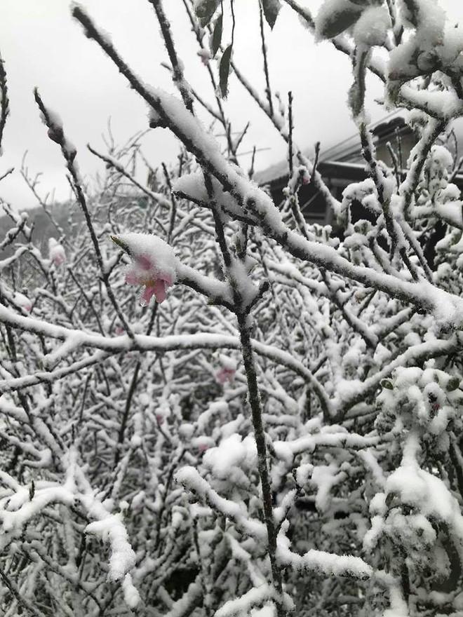 Sa Pa tuyết phủ trắng xóa như ngôi làng cổ tích, du khách ngỡ ngàng vì cảnh tượng quá đẹp - Ảnh 4.