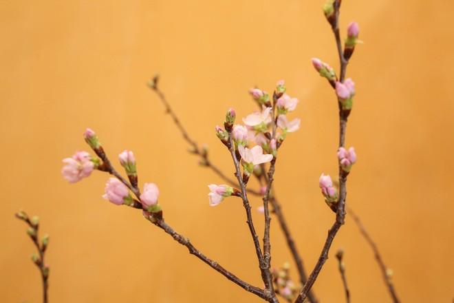 4 loại hoa nhập khẩu đắt tiền đang được chị em săn lùng ráo riết để trưng Tết 2018 - Ảnh 9.