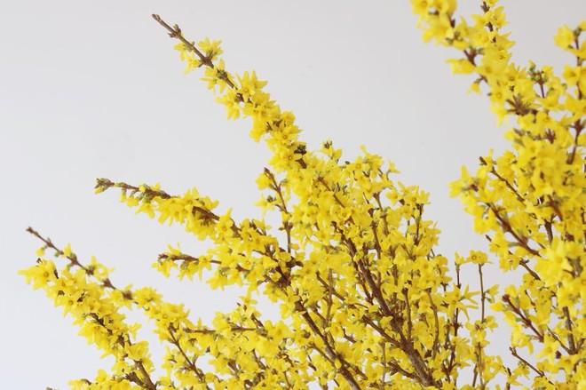 4 loại hoa nhập khẩu đắt tiền đang được chị em săn lùng ráo riết để trưng Tết 2018 - Ảnh 20.