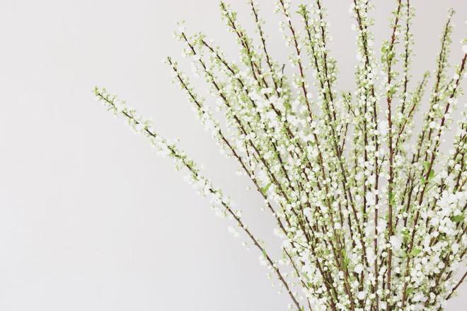 4 loại hoa nhập khẩu đắt tiền đang được chị em săn lùng ráo riết để trưng Tết 2018 - Ảnh 5.