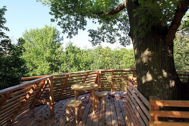 Độc đáo ngôi nhà gỗ trên cây sồi trăm tuổi - Ảnh 11.