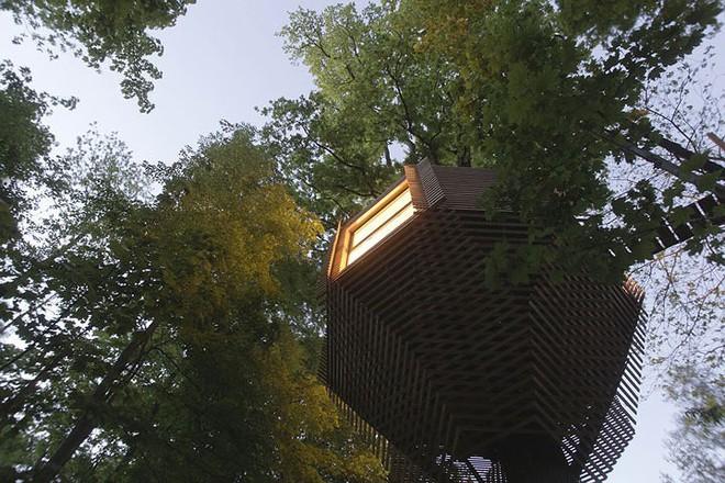 Độc đáo ngôi nhà gỗ trên cây sồi trăm tuổi - Ảnh 12.