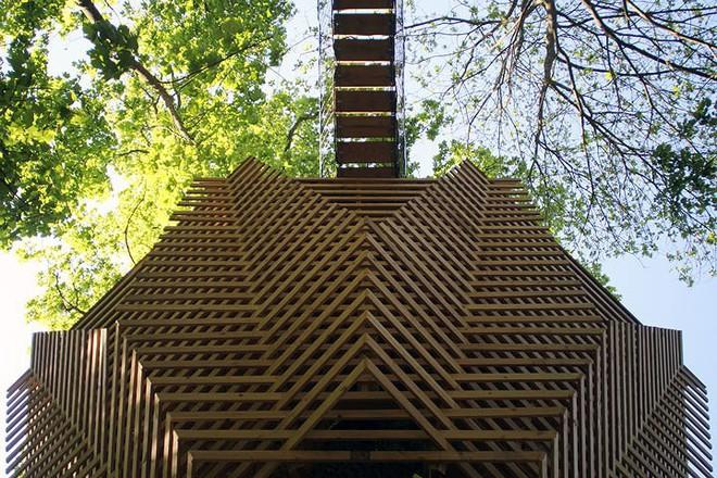 Độc đáo ngôi nhà gỗ trên cây sồi trăm tuổi - Ảnh 3.