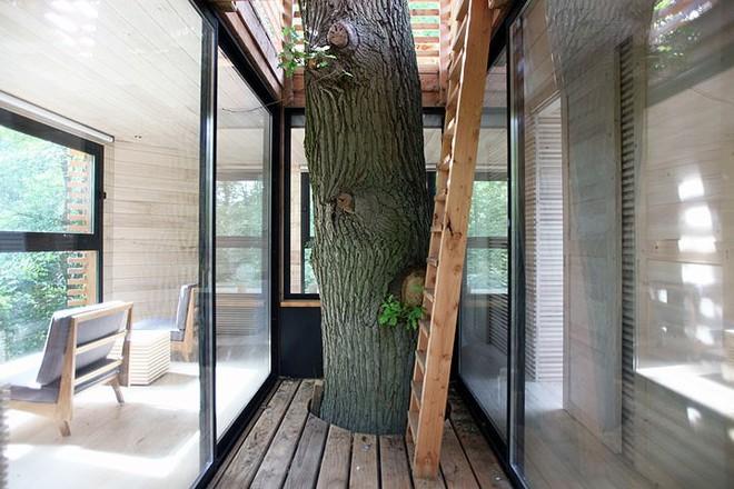 Độc đáo ngôi nhà gỗ trên cây sồi trăm tuổi - Ảnh 4.
