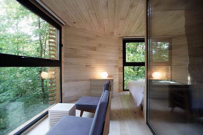 Độc đáo ngôi nhà gỗ trên cây sồi trăm tuổi - Ảnh 10.