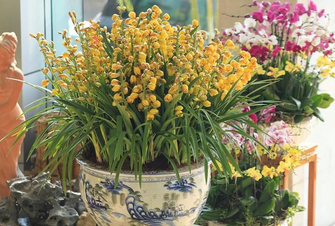 Các loại hoa ngày Tết mang lại may mắn và hạnh phúc cho gia chủ - Ảnh 1.