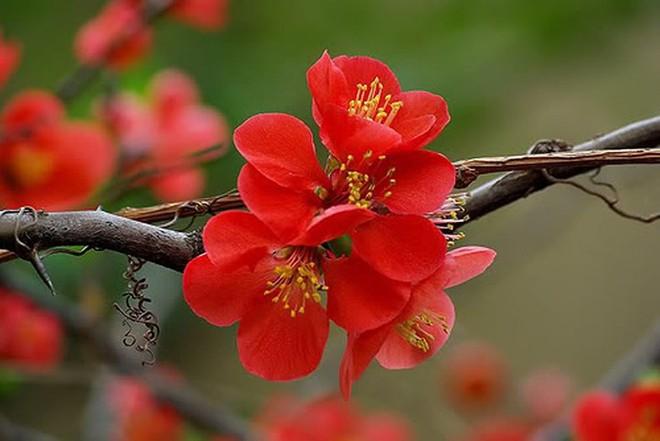 Các loại hoa ngày Tết mang lại may mắn và hạnh phúc cho gia chủ - Ảnh 2.