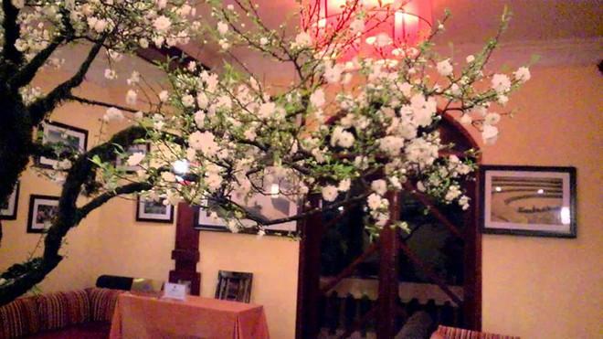 Các loại hoa ngày Tết mang lại may mắn và hạnh phúc cho gia chủ - Ảnh 8.
