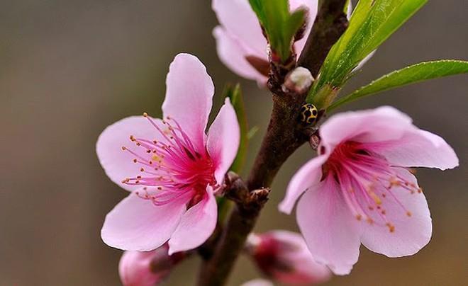 Các loại hoa ngày Tết mang lại may mắn và hạnh phúc cho gia chủ - Ảnh 10.