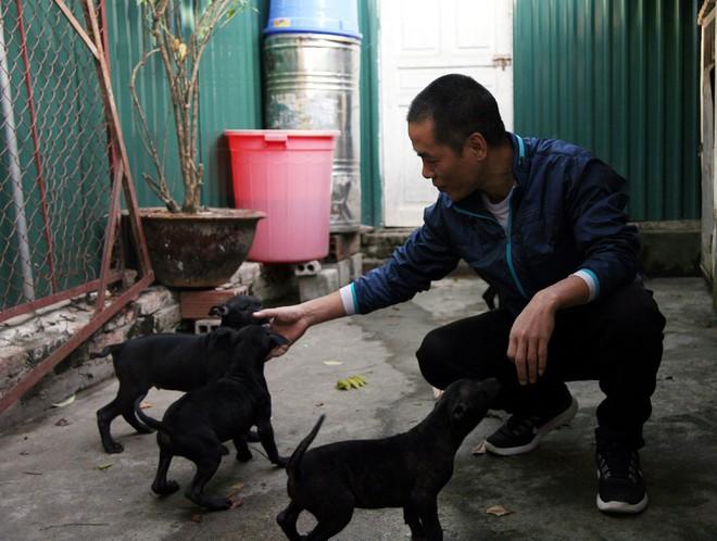 Gặp người đàn ông gắn bó với nghề nuôi chó Phú Quốc hơn 30 năm tại Hà Nội - Ảnh 9.