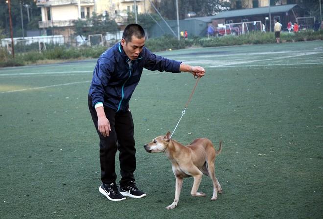 Gặp người đàn ông gắn bó với nghề nuôi chó Phú Quốc hơn 30 năm tại Hà Nội - Ảnh 10.