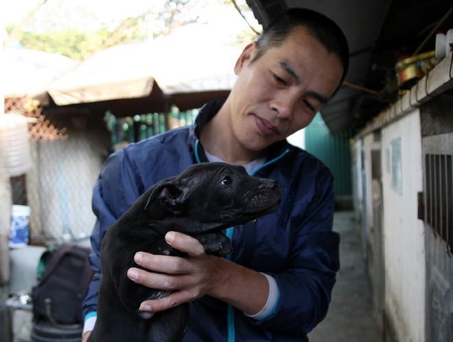 Gặp người đàn ông gắn bó với nghề nuôi chó Phú Quốc hơn 30 năm tại Hà Nội - Ảnh 6.