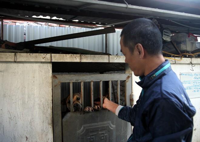 Gặp người đàn ông gắn bó với nghề nuôi chó Phú Quốc hơn 30 năm tại Hà Nội - Ảnh 3.