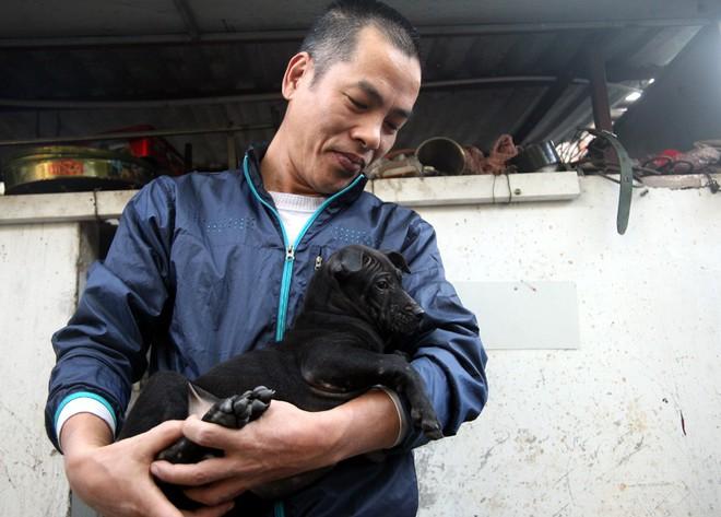 Gặp người đàn ông gắn bó với nghề nuôi chó Phú Quốc hơn 30 năm tại Hà Nội - Ảnh 2.