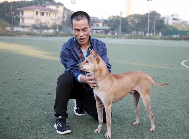 Gặp người đàn ông gắn bó với nghề nuôi chó Phú Quốc hơn 30 năm tại Hà Nội - Ảnh 8.