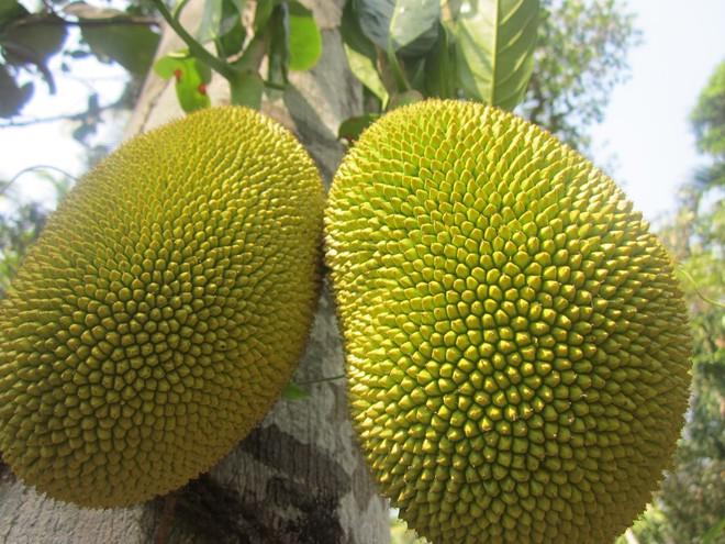 Ngày Tết có thể cúng nhiều loại trái cây nhưng 4 loại này thì tuyệt đối không được đặt lên bàn thờ - Ảnh 2.