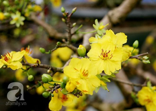6 loại hoa cổ truyền chưa bao giờ hết hot mỗi độ Tết đến, xuân về - Ảnh 6.