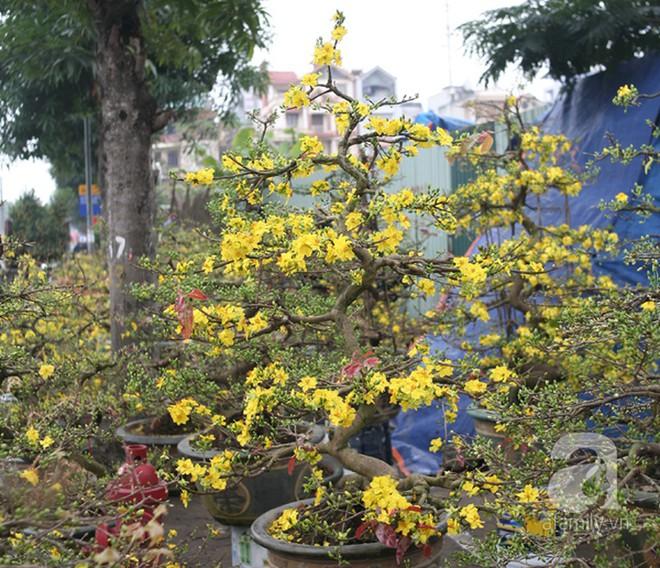 6 loại hoa cổ truyền chưa bao giờ hết hot mỗi độ Tết đến, xuân về - ảnh 8