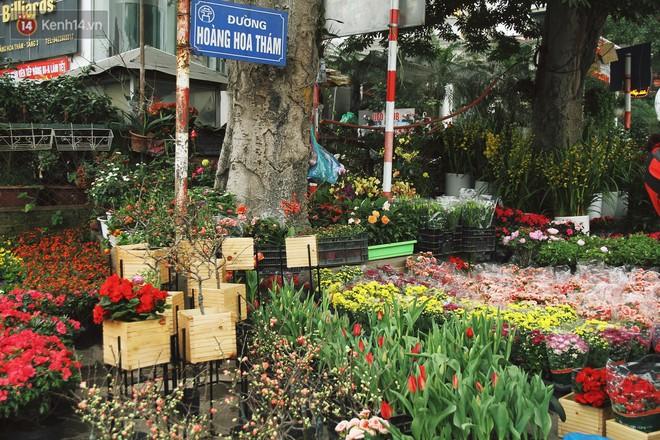 Đào tiến vua đại náo thị trường hoa Tết, giá bán lên tới hàng chục, hàng trăm triệu đồng - Ảnh 1.