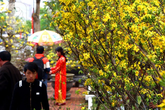 6 loại hoa cổ truyền chưa bao giờ hết hot mỗi độ Tết đến, xuân về - ảnh 9