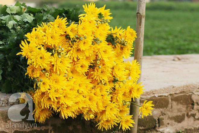 6 loại hoa cổ truyền chưa bao giờ hết hot mỗi độ Tết đến, xuân về - ảnh 27