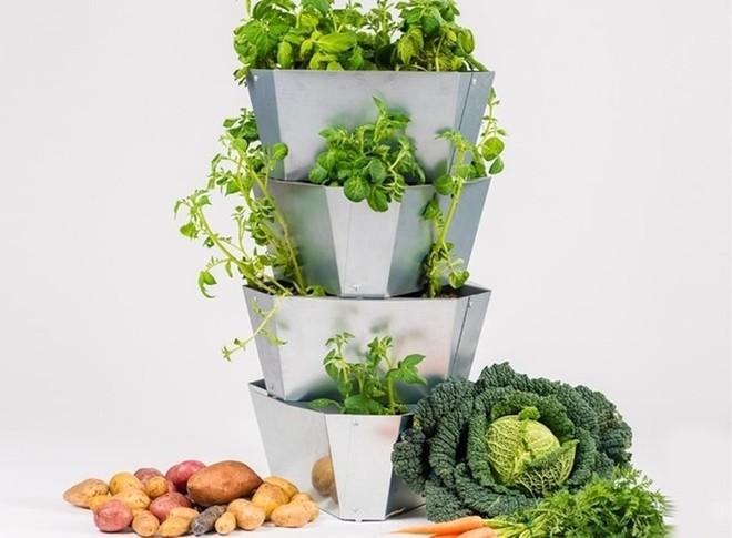 Đủ rau củ quả ăn cả năm nhờ kệ trồng cây tiết kiệm không gian cho nhà nhỏ - Ảnh 1.