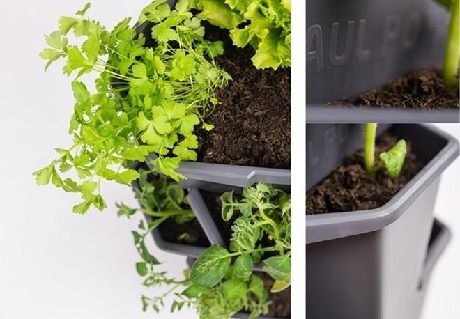 Đủ rau củ quả ăn cả năm nhờ kệ trồng cây tiết kiệm không gian cho nhà nhỏ - Ảnh 4.