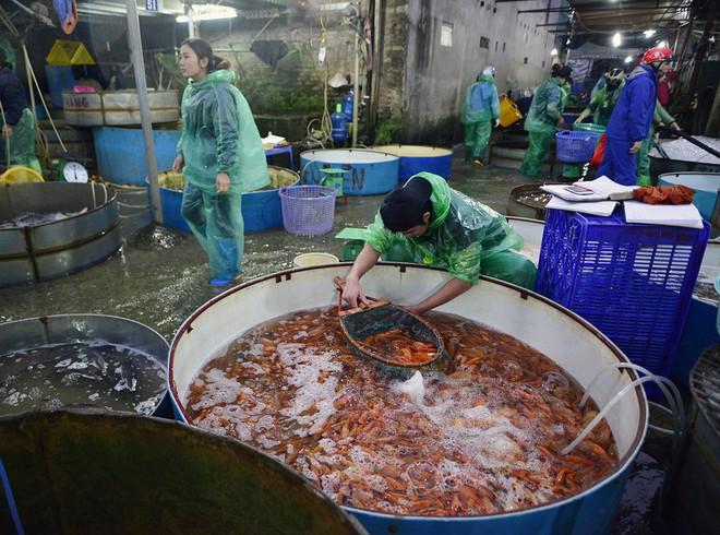 Hà Nội: Chợ cá chép đỏ nhộn nhịp trước ngày tiễn Táo quân về trời - Ảnh 7.