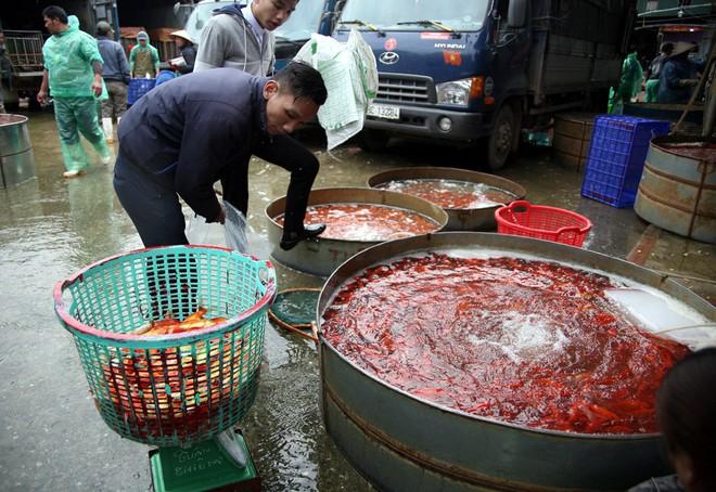 Hà Nội: Chợ cá chép đỏ nhộn nhịp trước ngày tiễn Táo quân về trời - Ảnh 8.
