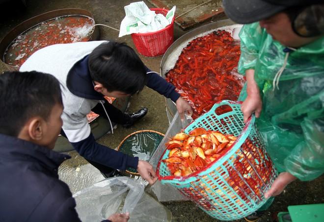 Hà Nội: Chợ cá chép đỏ nhộn nhịp trước ngày tiễn Táo quân về trời - Ảnh 9.