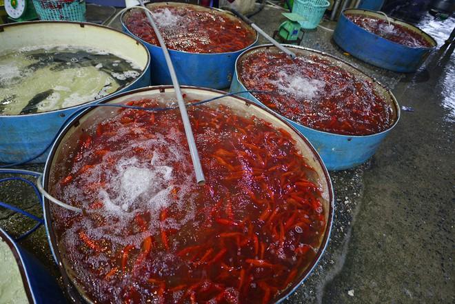 Hà Nội: Chợ cá chép đỏ nhộn nhịp trước ngày tiễn Táo quân về trời - Ảnh 14.