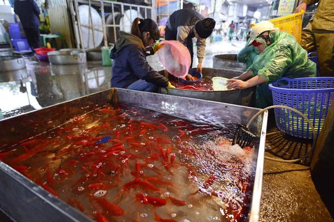 Hà Nội: Chợ cá chép đỏ nhộn nhịp trước ngày tiễn Táo quân về trời - Ảnh 3.
