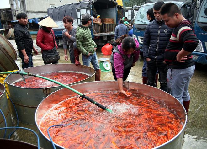 Hà Nội: Chợ cá chép đỏ nhộn nhịp trước ngày tiễn Táo quân về trời - Ảnh 6.