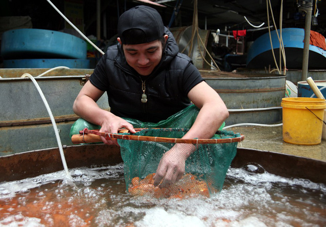Hà Nội: Chợ cá chép đỏ nhộn nhịp trước ngày tiễn Táo quân về trời - Ảnh 5.