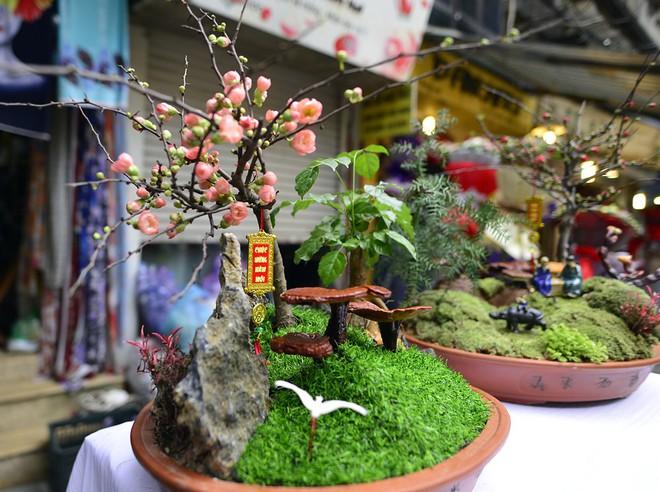 Hà Nội: Nấm linh chi thành bonsai nhỏ xinh hút khách mua về chưng Tết - Ảnh 2.