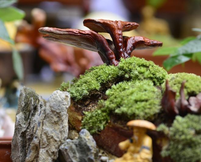 Hà Nội: Nấm linh chi thành bonsai nhỏ xinh hút khách mua về chưng Tết - Ảnh 3.