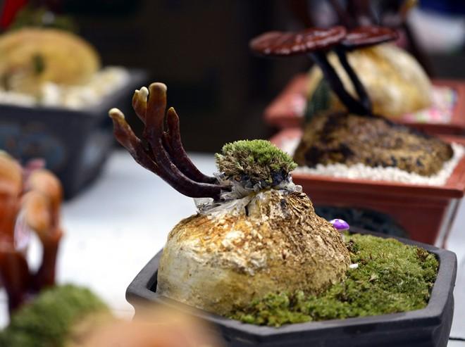 Hà Nội: Nấm linh chi thành bonsai nhỏ xinh hút khách mua về chưng Tết - Ảnh 5.