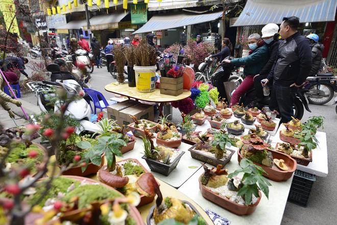 Hà Nội: Nấm linh chi thành bonsai nhỏ xinh hút khách mua về chưng Tết - Ảnh 1.