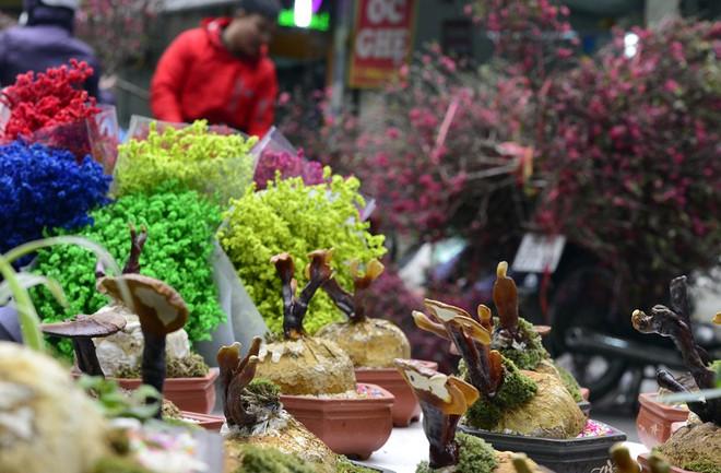 Hà Nội: Nấm linh chi thành bonsai nhỏ xinh hút khách mua về chưng Tết - Ảnh 12.