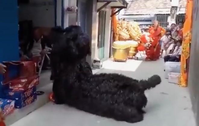 Clip: Nghệ sĩ múa lân tập luyện múa chó mừng xuân Mậu Tuất cho đúng tính chất - Ảnh 2.