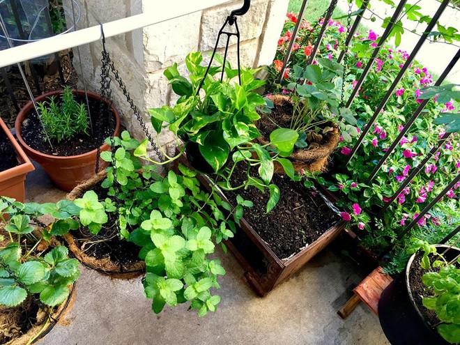 Nữ du học sinh Việt tại Mỹ tiết lộ bí quyết tạo khu vườn mini 6m² nhưng đủ rau và hoa đẹp hút hồn - Ảnh 3.