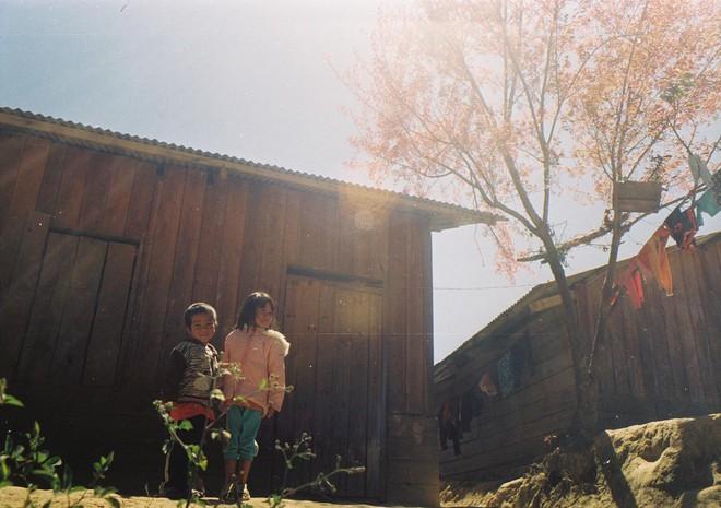 Lên Đà Lạt mùa này tuyệt như đi Nhật, có mai anh đào nở rộ rực hồng, trời lại rất xanh trong - Ảnh 12.