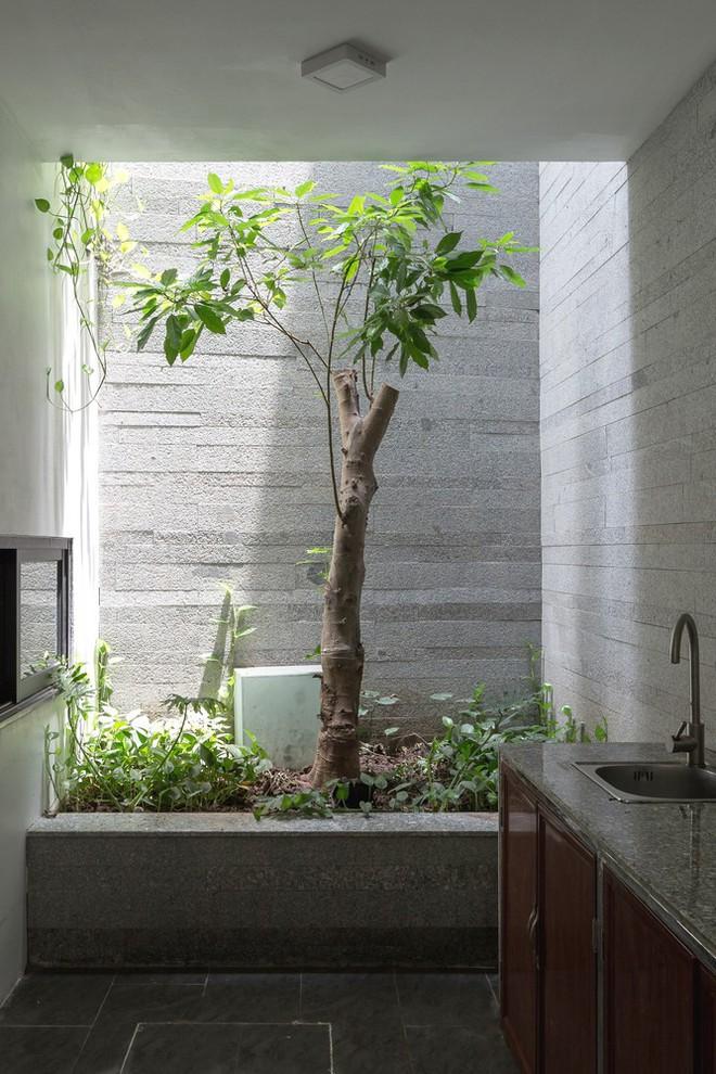 Ngôi nhà nhìn đâu cũng thấy cây xanh và có hẳn một vườn rau trên sân thượng cực rộng ở Hà Nội - Ảnh 8.