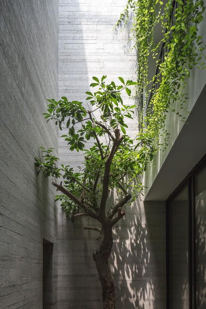 Ngôi nhà nhìn đâu cũng thấy cây xanh và có hẳn một vườn rau trên sân thượng cực rộng ở Hà Nội - Ảnh 9.