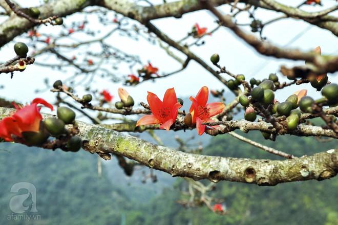 Tháng 3 về, hoa gạo thắp sáng núi rừng chùa Hương - Ảnh 7.
