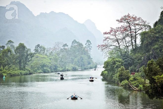 Tháng 3 về, hoa gạo thắp sáng núi rừng chùa Hương - Ảnh 1.