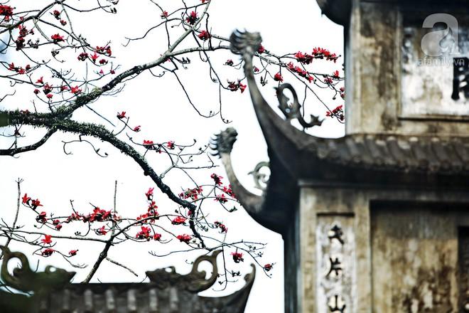 Tháng 3 về, hoa gạo thắp sáng núi rừng chùa Hương - Ảnh 13.