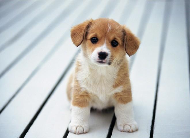 Dõng dạc đứng cãi nhau tay đôi với chó, cậu bé khiến cư dân mạng thích thú vì quá đáng yêu - Ảnh 2.